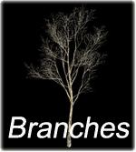 Branches v3.0
