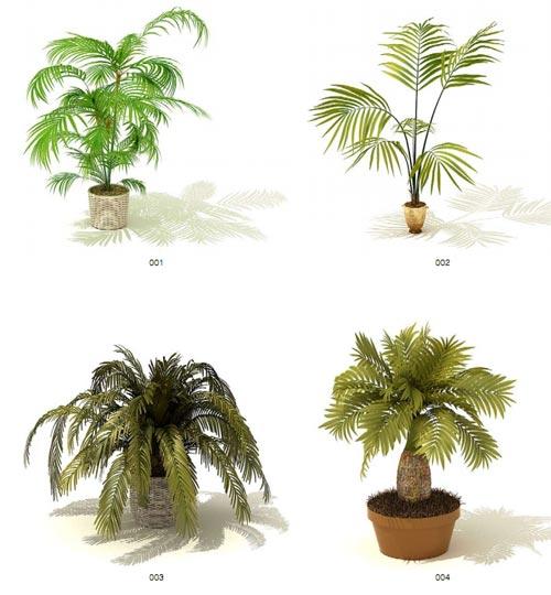 3d модели комнатных растений - 65 шт